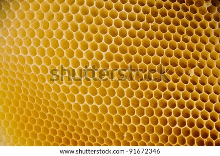 Honeycomb for background - stock photo