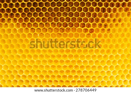 Honeycomb in beehive, closeup - stock photo