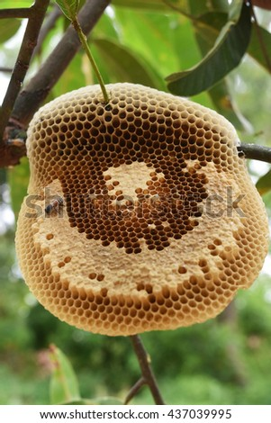 Honeycomb in the nature - stock photo