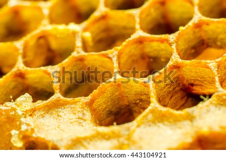 honeycomb macro as a background - stock photo