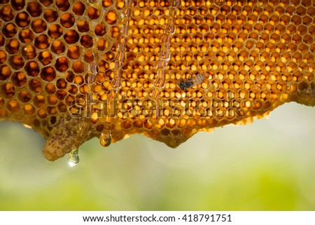 honeycomb on nature background - stock photo