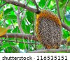 honeycomb on the tree,insect,animal - stock photo