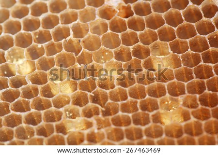 honeycomb texture as background. - stock photo