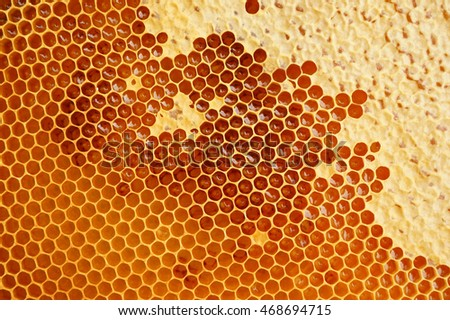 honeycomb texture with honey as nice natural food background