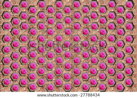Honeycomb Wall & Rose - stock photo