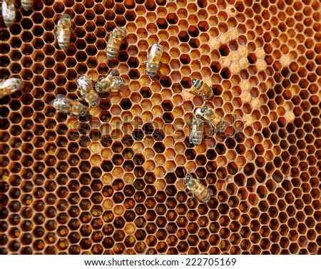 Honeycomb with eggs, larvae and capped brood - stock photo