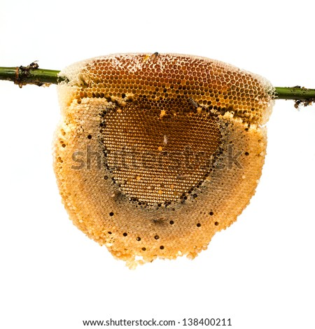 honeycomb with honey and bee on bamboo branch, isolated on white background - stock photo