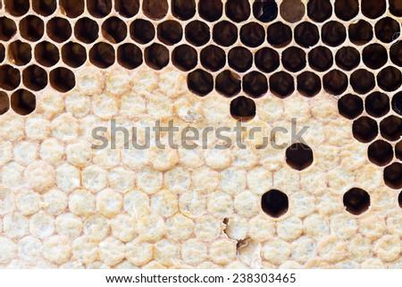 honeycomb with sweet honey - stock photo
