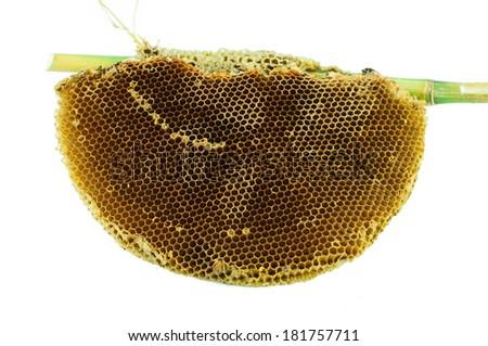 honeycombs - stock photo