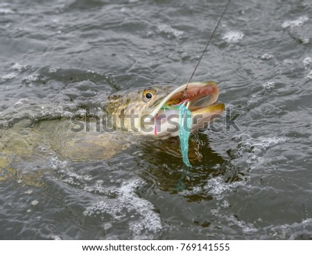 Northern Pike Stock Images, Royalty-Free Images & Vectors ...