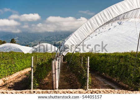 Hoop tents over raspberry vines growing in the Pajaro Valley of California. - stock photo