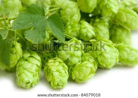 Hop - stock photo