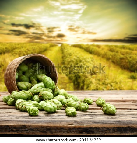 hop and sky  - stock photo