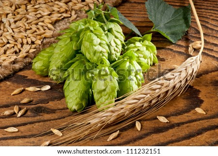 hop cone - stock photo