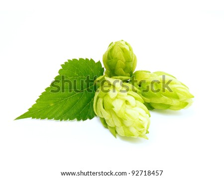 Hop cone with leaf. Isolated on white. - stock photo