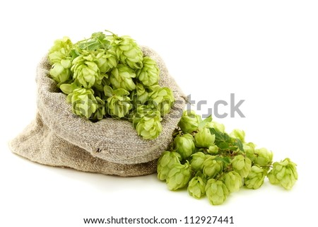 Hop cones in a bag on a white background.