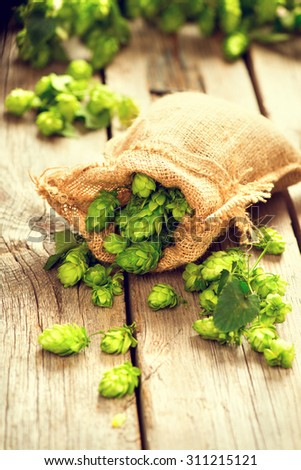 Hop in bag on wooden cracked old table. Brewing. Ingredient for brewing beer. Beauty fresh-picked hop cones closeup. Sack of hops on vintage background. Alternative medicine. Beer concept  - stock photo