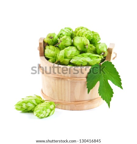 hop in wood barrel isolated