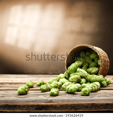 hop of green color  - stock photo