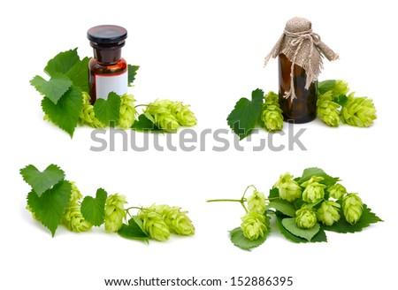 Hop plant and pharmaceutical bottles on white background. - stock photo