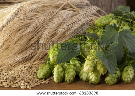 hopcones with barley - stock photo