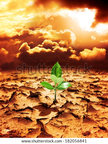 hope of new life in a destroyed environment from pollution  - stock photo