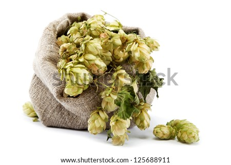 Hops in a bag isolated on white background. - stock photo