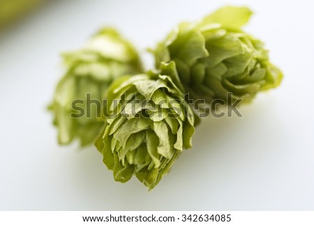 hops isolated on a white - stock photo