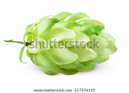 hops on a white background. Clipping Path - stock photo