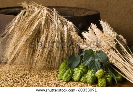 hops with barleycorn - stock photo