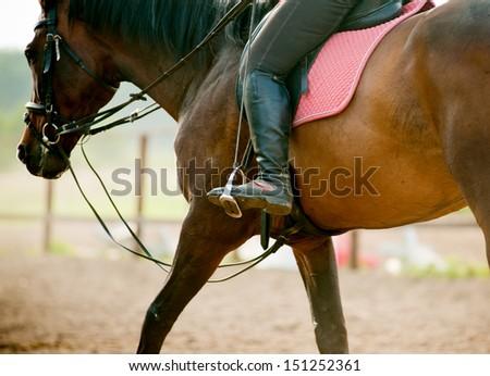hore riding - stock photo