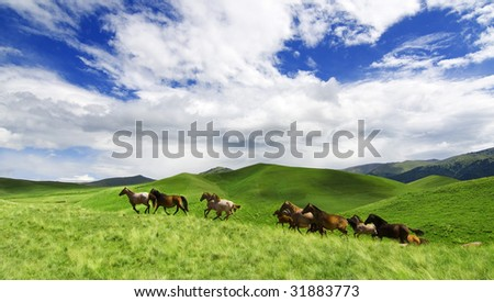horeses running in the alpes - stock photo