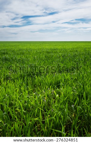 Horizon vertical landscape of green grass field and bright blue sky. Nature and agriculture background.
