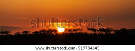 Horizontal banner - Colorful African orange sunset with trees in silhouette