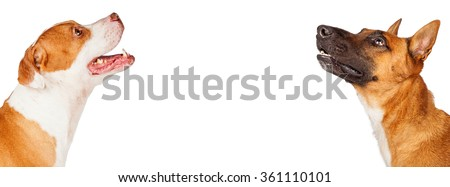 Horizontal banner with profile closeup of two mixed large breed dogs looking up. Image sized to fit a popular social media cover photo placeholder.  - stock photo