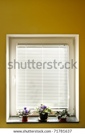 Horizontal blinds on window with three houseplants - stock photo