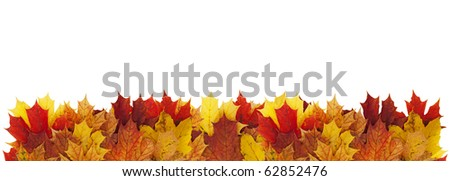 Horizontal border made of autumn maple leaves. - stock photo