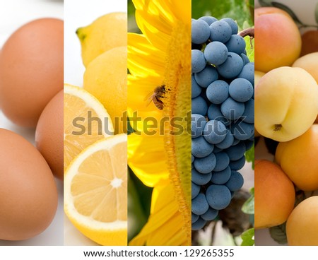 Horizontal collage featuring some of natures food abundance - stock photo