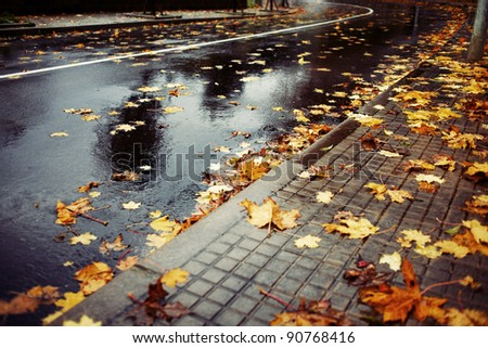 Horizontal color image of a wet road covered with brown and yellow leaves on an autumn rainy day.