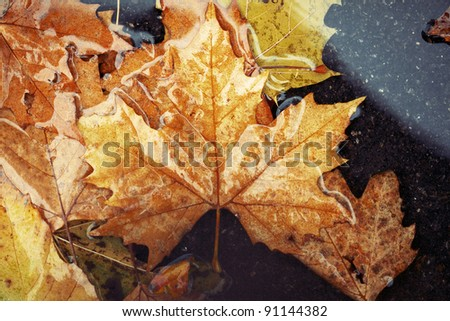 Horizontal color image of some brown and yellow autumn leaves on a wet and watery ground. Winter image with a touch of solitude and serenity. - stock photo