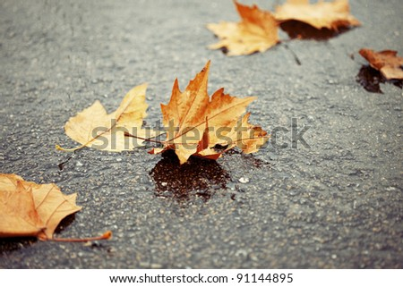 Horizontal color image of some brown and yellow autumn leaves on a wet and watery ground. Winter image with a touch of solitude and serenity.