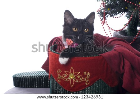 Horizontal image of a cute black kitten cuddled up in a red and green velvet Christmas gift box on a white background. - stock photo