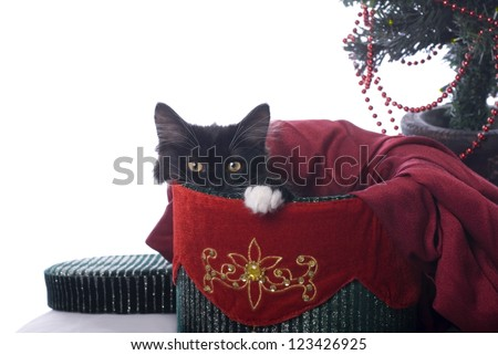 Horizontal image of a cute black kitten with a white pay, cuddled up in a red and green velvet Christmas box. - stock photo
