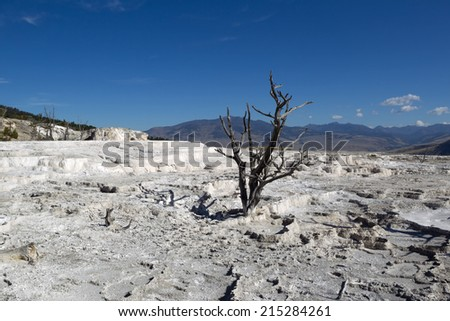 Horizontal image of a standing dead tree within the hot springs of Yellowstone National Park with blue sky and clouds in background - stock photo