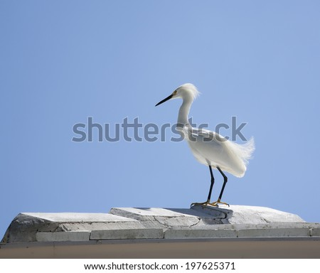 horizontal image of a white snow egret on a background blue sky with white clouds - stock photo