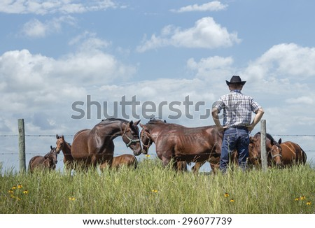 horizontal image of cowboy wearing jeans and cowboy hat standing with hands on hips by fence watching his horses with two horses nudging their head together in love in summer time under blue sky. - stock photo