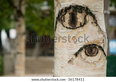 horizontal macro of Birch bark trunk which appears to have eyes looking out - stock photo