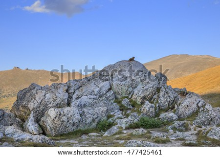 horizontal orientation color image of a single, lone, yellow bellied marmot sitting at the top of a rocky outcropping in the Rocky Mountains / Marmot on a Rocky Outcropping