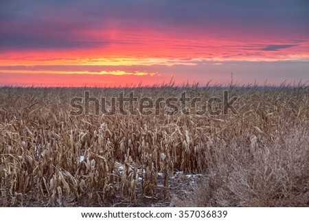 horizontal orientation color image with dried cornstalks in the foreground and a beautiful Colorado sunrise in the background, with copy space / Sunrise in Colorado - Horizontal