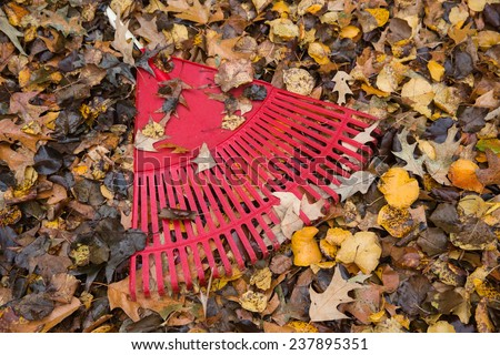 horizontal orientation with a bright, red, rake in the foreground, partly covered by fallen leaves of different colors / Useful Garden Tool - The Rake - stock photo